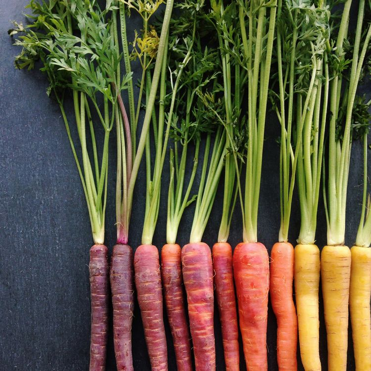 Photo of Carrot Gradient Print — wright kitchen