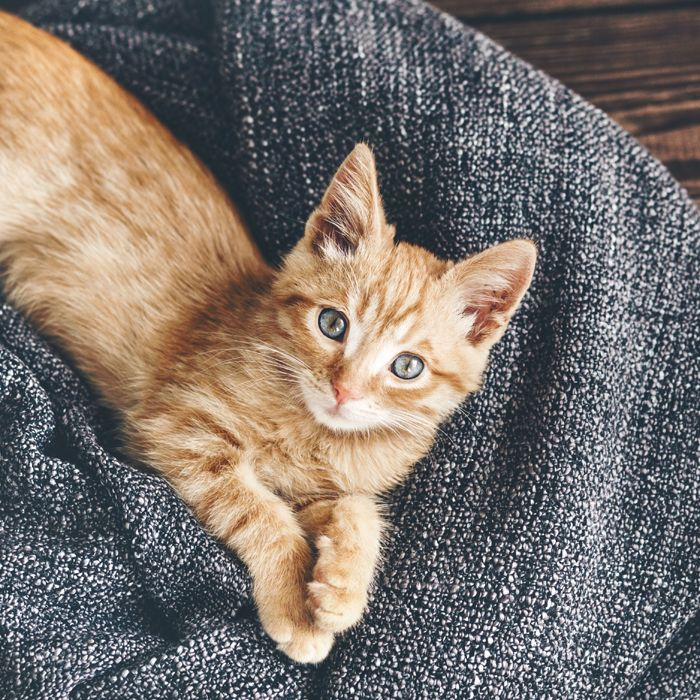 Southside Communities Apartments Rentals: Pets Are Welcome At The Lofts At Southside. We Know They