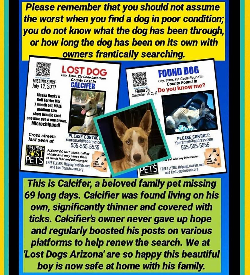 Craigslist Albuquerque Community Pets - Wayang Pets