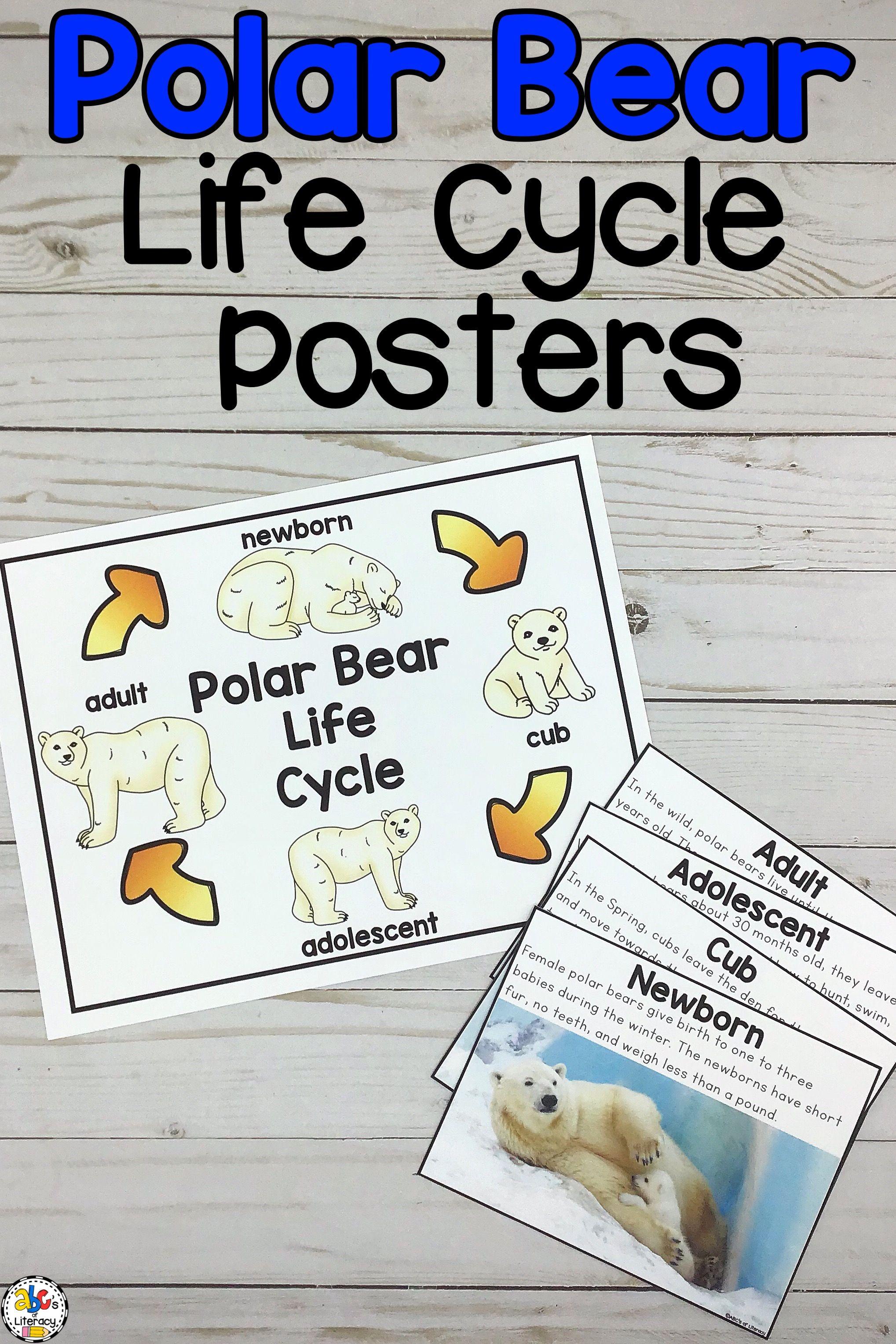 Polar Bear Life Cycle Posters Polar Bears Activities Polar Bears Kindergarten Life Cycles [ 3055 x 2037 Pixel ]