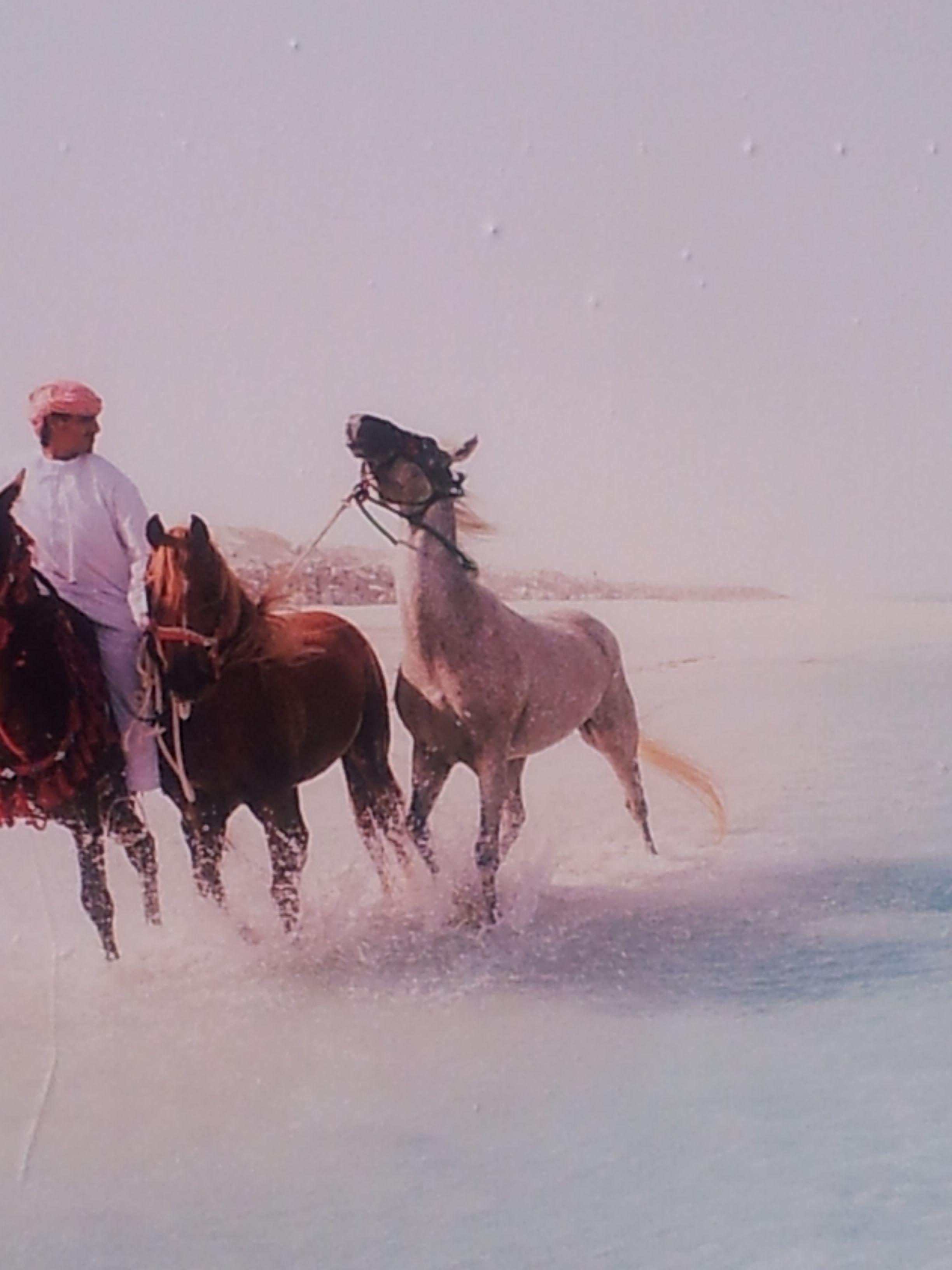 arabian horses....................