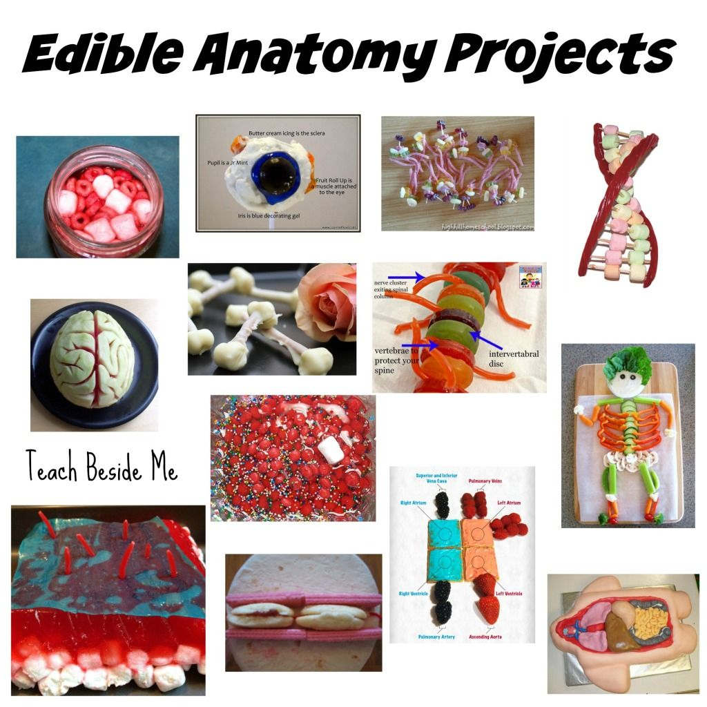 100 Edible Education Projects | Medical Science! | Pinterest ...