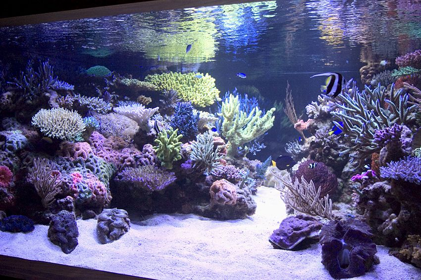 Reef aquarium aquascape designs my manly fish beat up for Best fish for reef tank