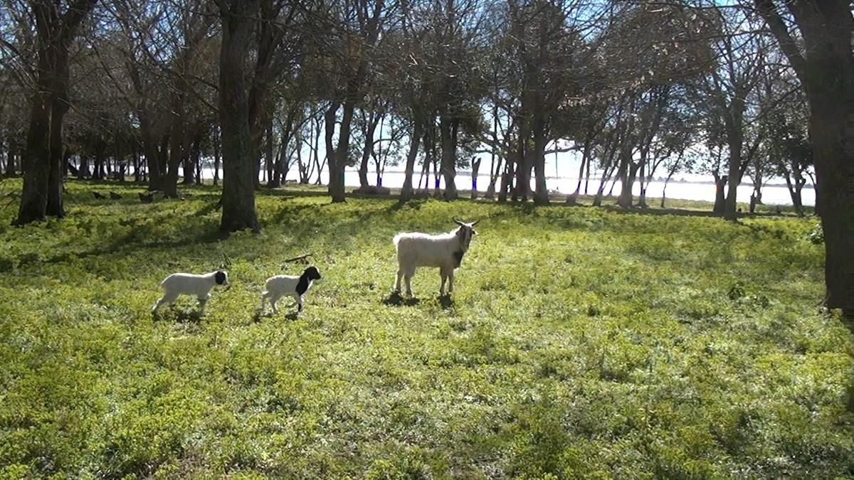 #BuenosAires #Argentina #Viajes #Travel #ArgentinaEsTuMundo #Turismo #Verde #Green #Colour #Colores Más info de viajes por Argentina en www.facebook.com/viajaportupais