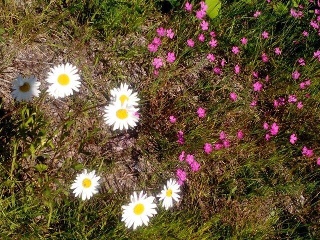 Kesä kukkeimmillaan