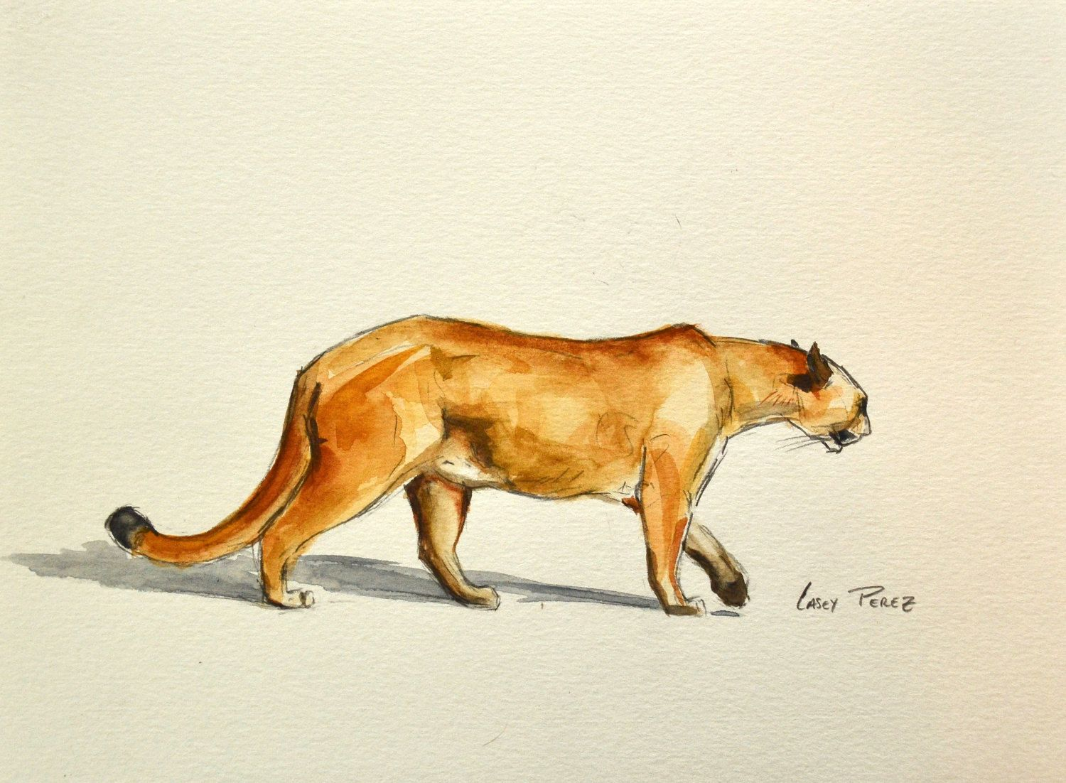 a207b6a25bf20 watercolor Lion | Mountain Lion Painting Watercolor 7x10 by ...