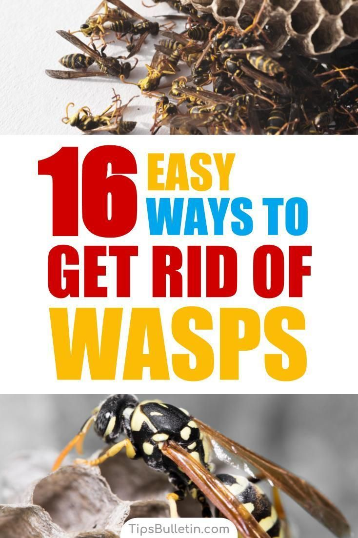 How to keep wasps away 16 ways to get rid of wasps with