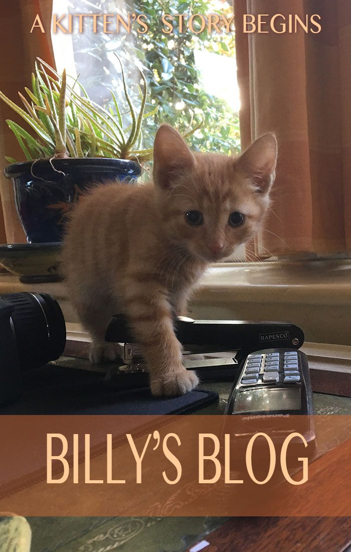 8 Week Old Kitten Feeding Weight Care And Routines Cat Parenting Best Clumping Cat Litter Ginger Kitten