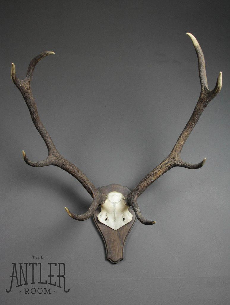 The Weird Wonderful Deer Antlers Antlers Whiskey Room