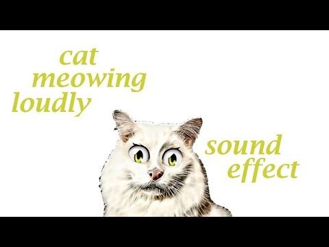 Cat Meowing Loudly Sound Effect Animation Cat