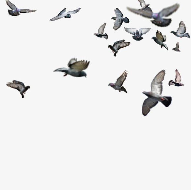 Birds Png Animal Birds Birds Clipart Seagull Bird Clipart Animals Birds Flying