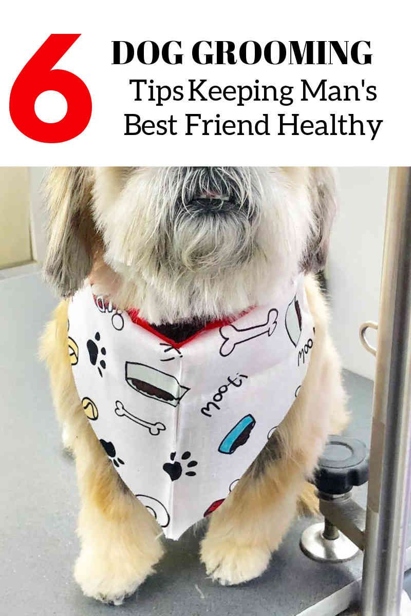 Basic Dog Grooming Tips To Know Dog Care Tips Dogs Dog