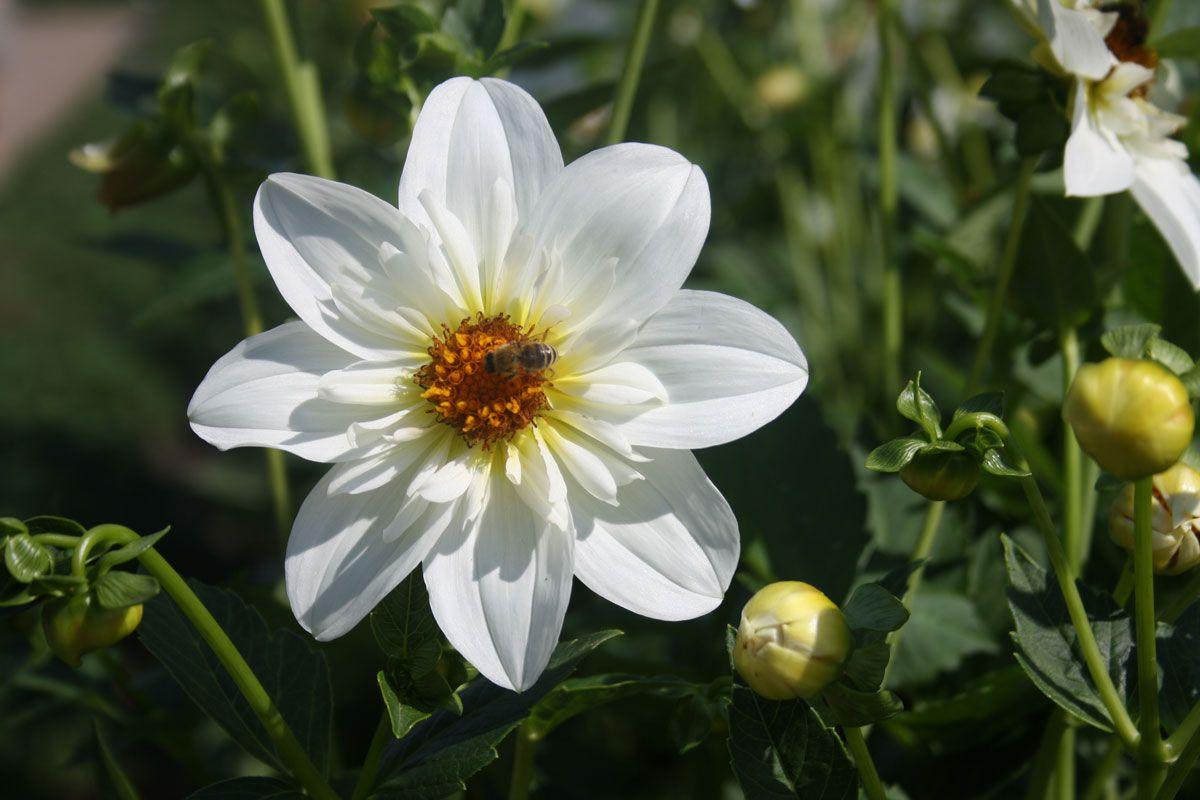 Website, Werbung und PR für Floristen, Gärtner