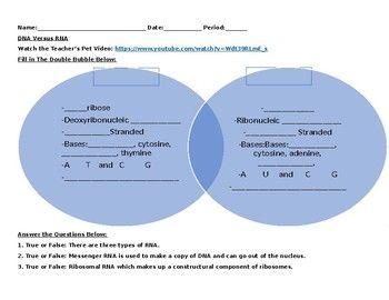 Dna versus rna video worksheet editable worksheets venn dna versus rna video worksheet editable worksheets venn diagrams and video link ccuart Choice Image