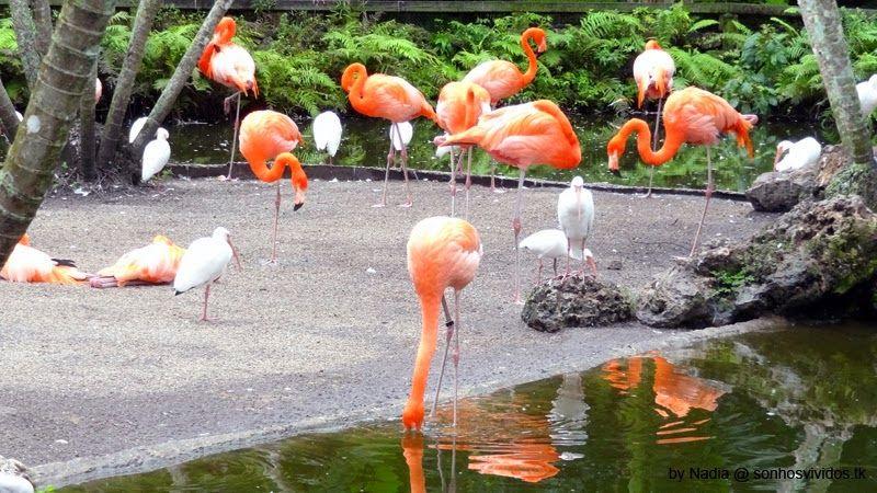 Fort Lauderdale Flamingo Gardens Flamingo garden