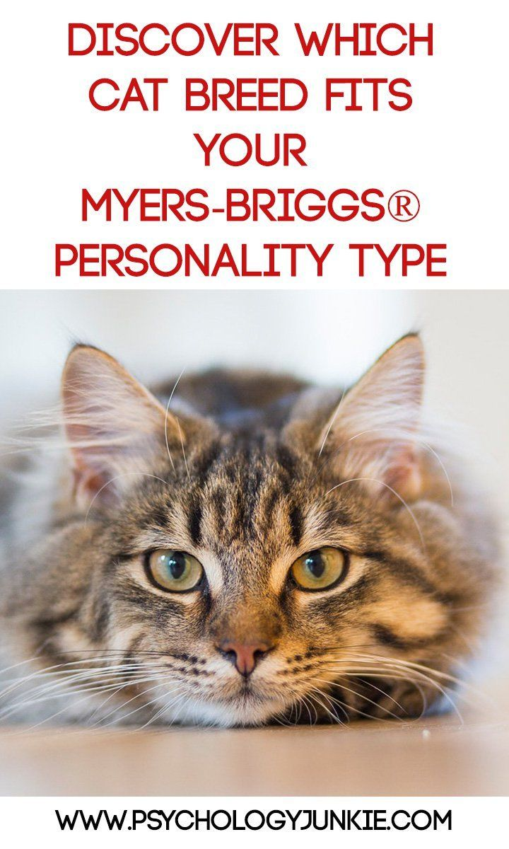 Which Cat Breed Fits Your Myers Briggs Personality Type Cat Parenting Cat Facts Cat Breeds