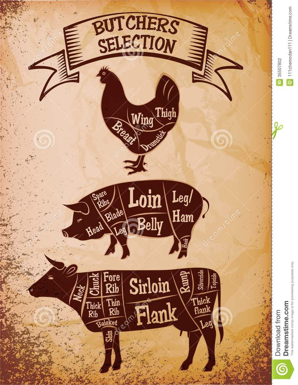 simple beef anatomy - Google Search | North Market BURGER CONCEPT ... for Chicken Meat Cuts Chart  193tgx