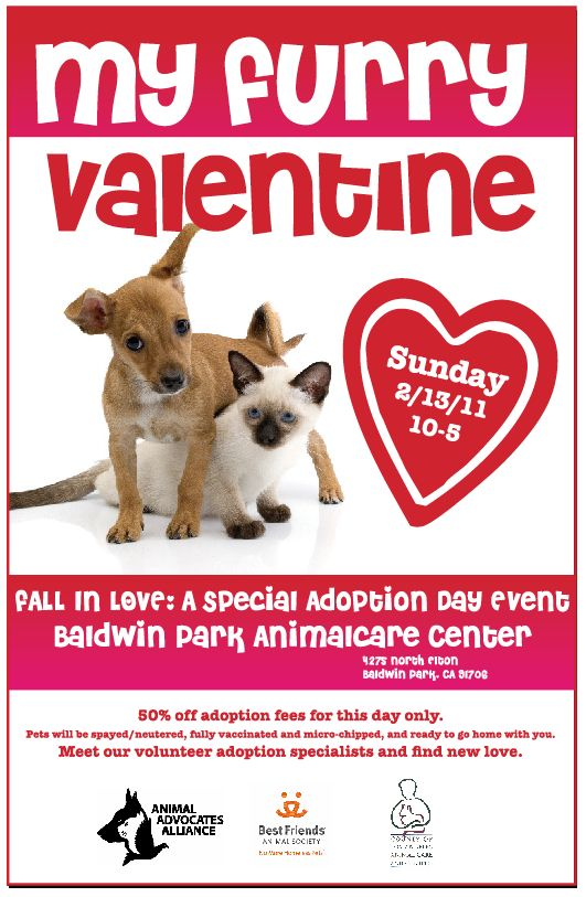 Aaa Valentine10 Jpg 531 813 Pets Animal Shelter Quotes Dog Adoption Event