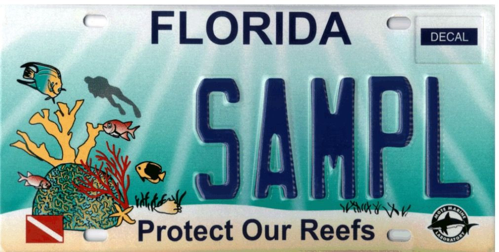 Pin by Ann Heenan on Florida License plate, Specialty
