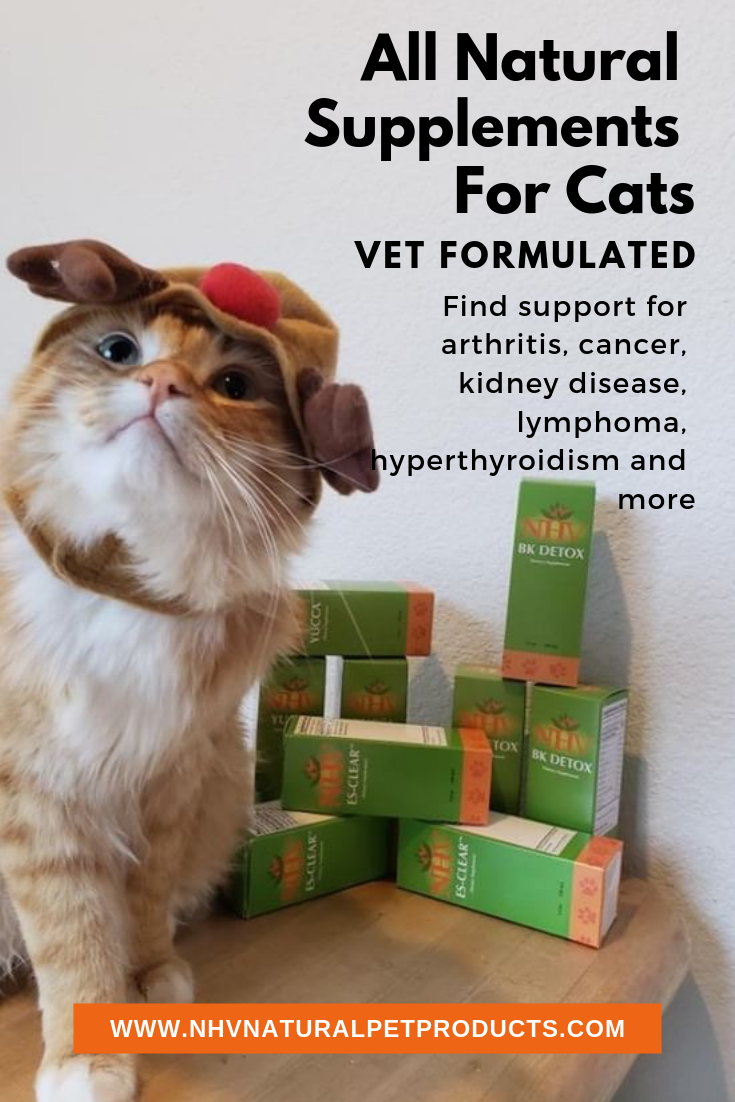 All natural supplements and remedies for pets vet
