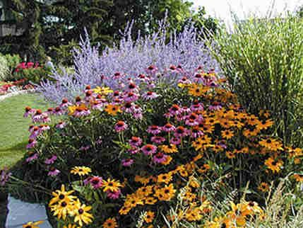 perennial garden design on the palette plant selection