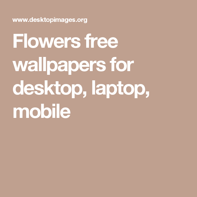 Flowers free wallpapers for desktop, laptop, mobile