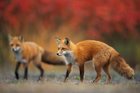 Autumn colors Photo by Vladislav Kamenski — National Geographic Your Shot