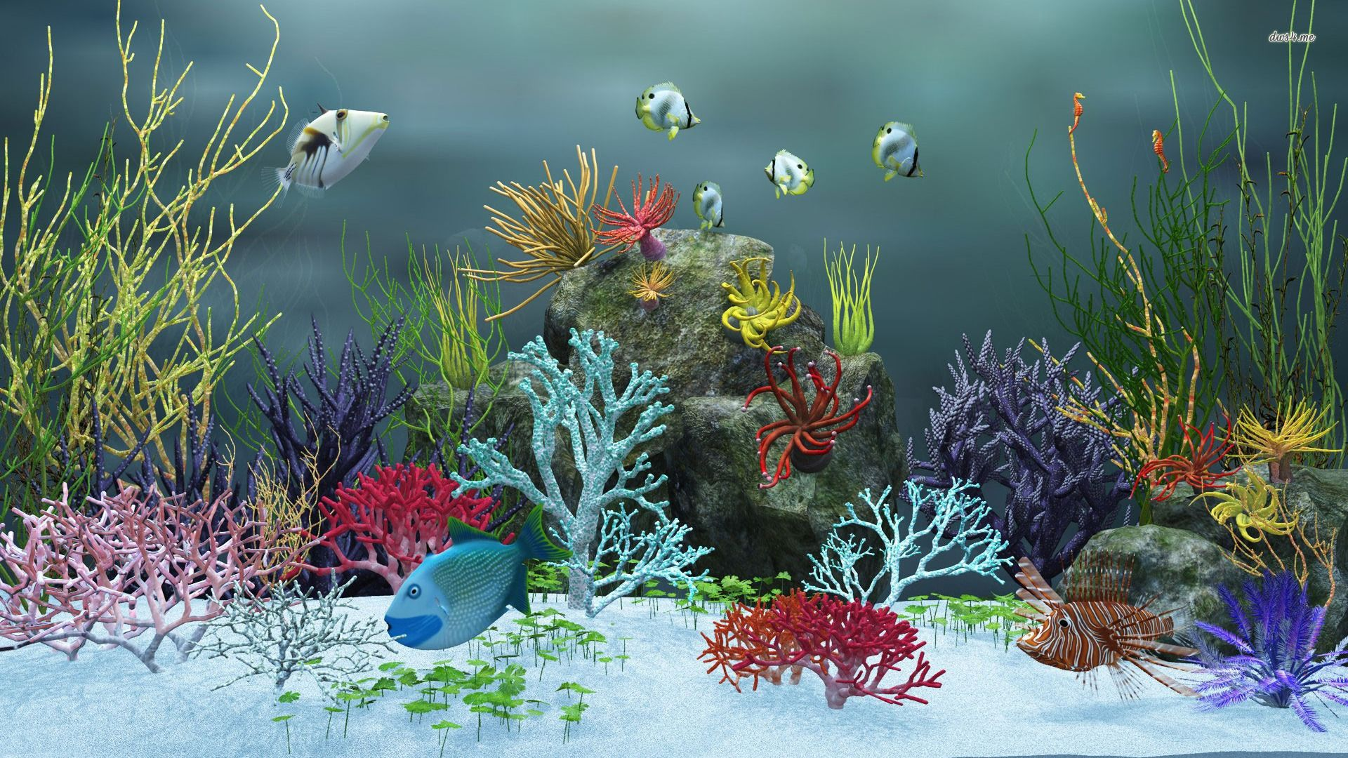 Картинка аквариум заставка