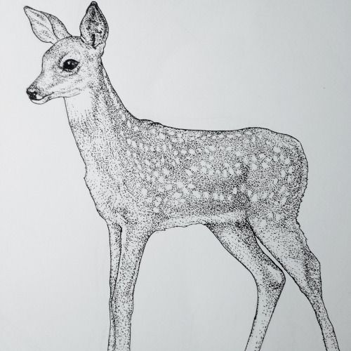 scientific illustration rabbitholeconfessional fawn