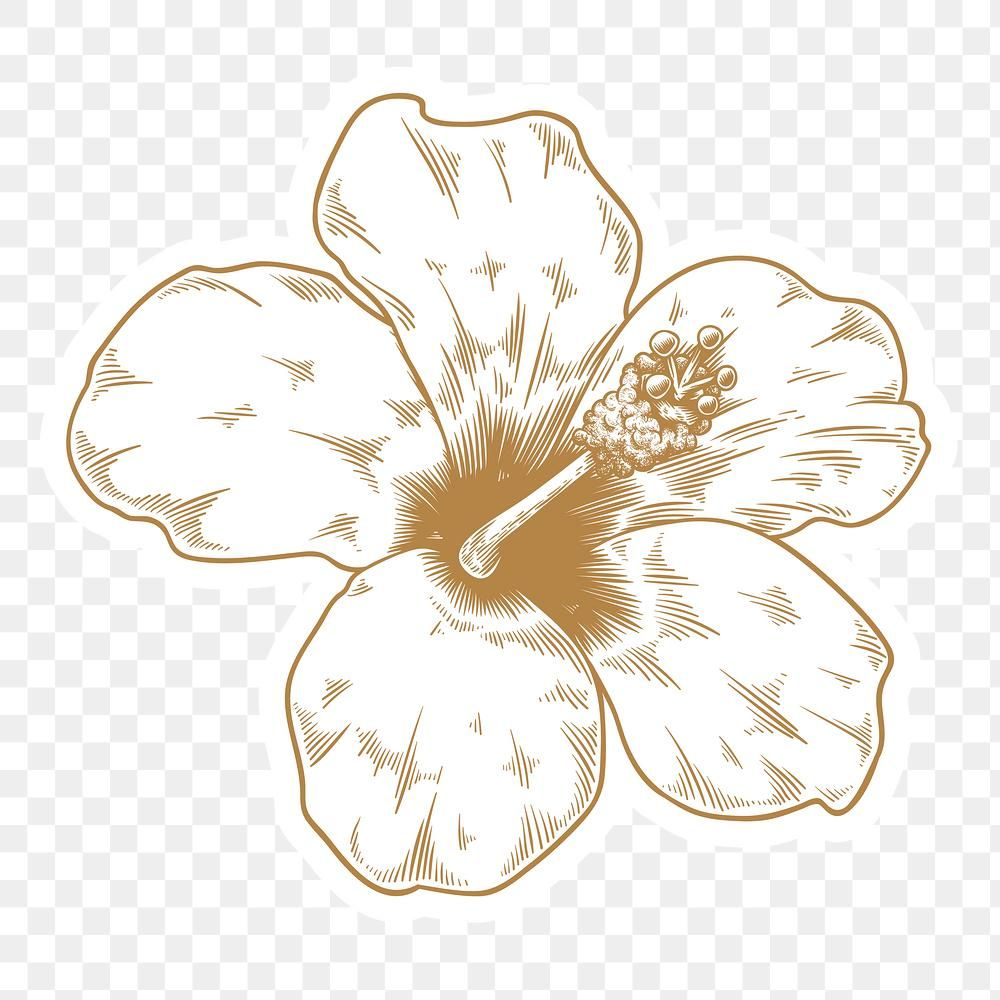 Gold And White Hibiscus Flower Sticker With A White Border Design Element Premium Image By Rawpixel Com Aum White Hibiscus Hibiscus Flowers Hibiscus