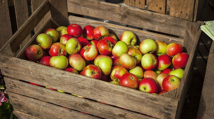 Here's the Secret to Storing Apples All Winter How to