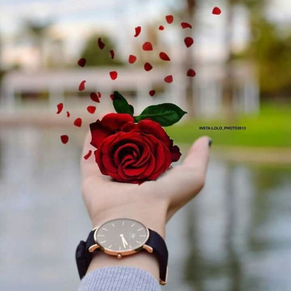 Online Shopping For Wholesale Products Beautiful Roses Beautiful Flowers Profile Picture For Girls