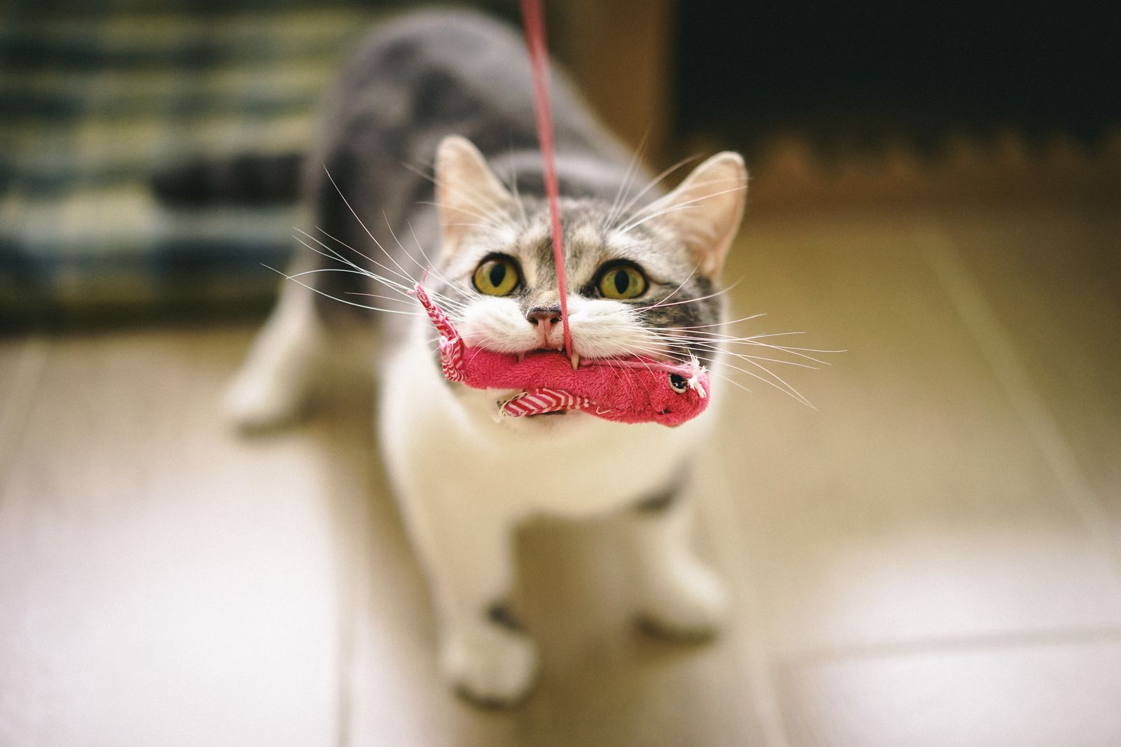 Ready for Sashimi? Cute cats, dogs, Funny cute cats