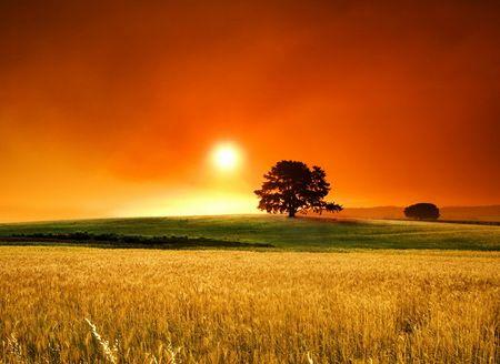 Summer Beautiful Country Field Fields Grass Green Nature Orange Red Sky Scenery Scenic Stunning Sun Sunset Tre Scenery Wallpaper Scenery Sunset
