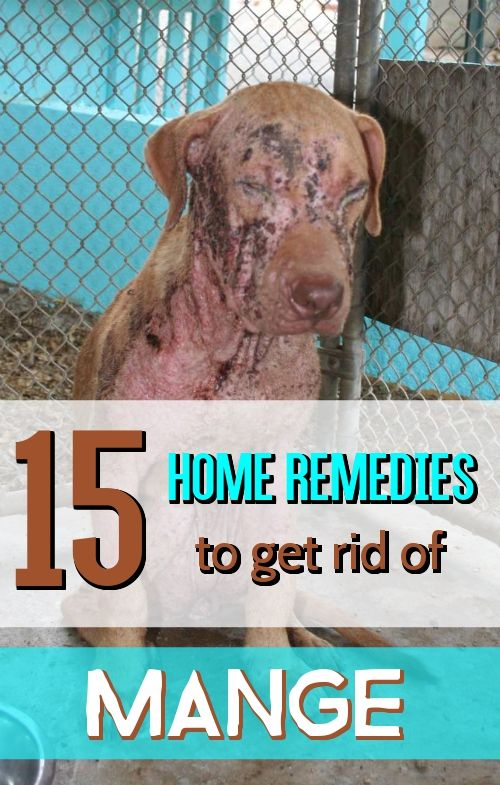 15 Effective Home Remedies For Mange In Dogs Dog Mange Dog
