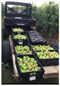 Apple Country Orchards in Idalou, TX
