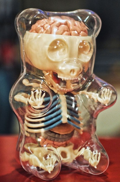 Anatomy Of A Gummy Bearw Now I Feel Bad For Eatin The Head First