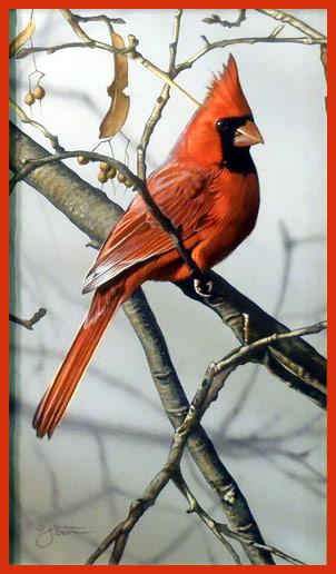 Cardinal V Pinturas De Aves Pajaros Cardenales Pajaros Y Flores