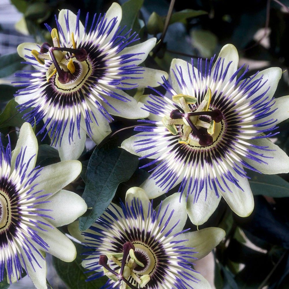 Pin On Flores Especiales 400 x 300