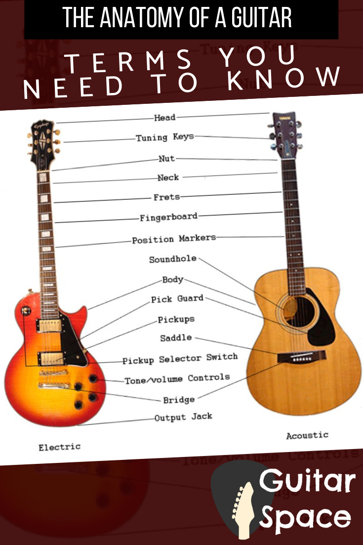 The Anatomy Of A Guitar Terms You Need To Know You Are Most Likely Reading This Article Because Y Playing Guitar Guitar For Beginners Learn Guitar Beginner