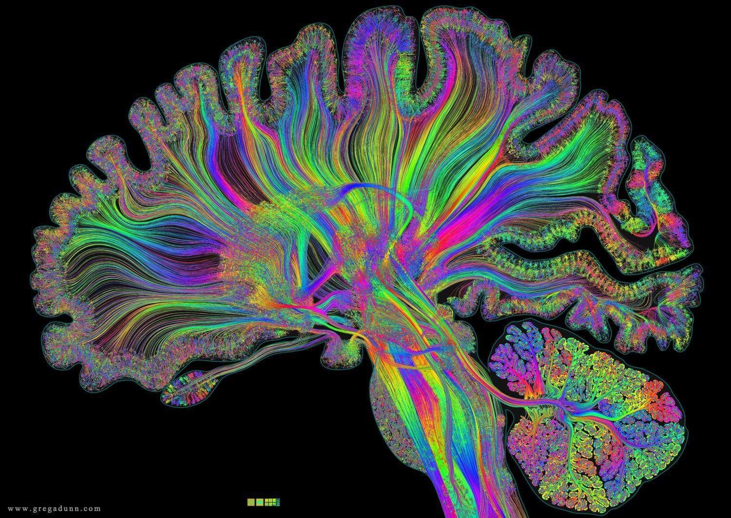 Detailed map of the brain