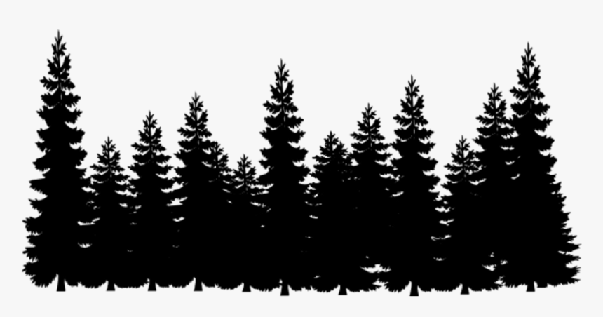 Eastern White Pine Pinus Strobus Tree Facts Habitat Pictures Coniferous Forest White Pine Tree Eastern White Pine Pine Tree Tattoo