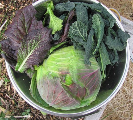 30 Amazing Ideas For Growing A Vegetable Garden In Your: 30 Crops To Plant In Summer For A Fall Harvest
