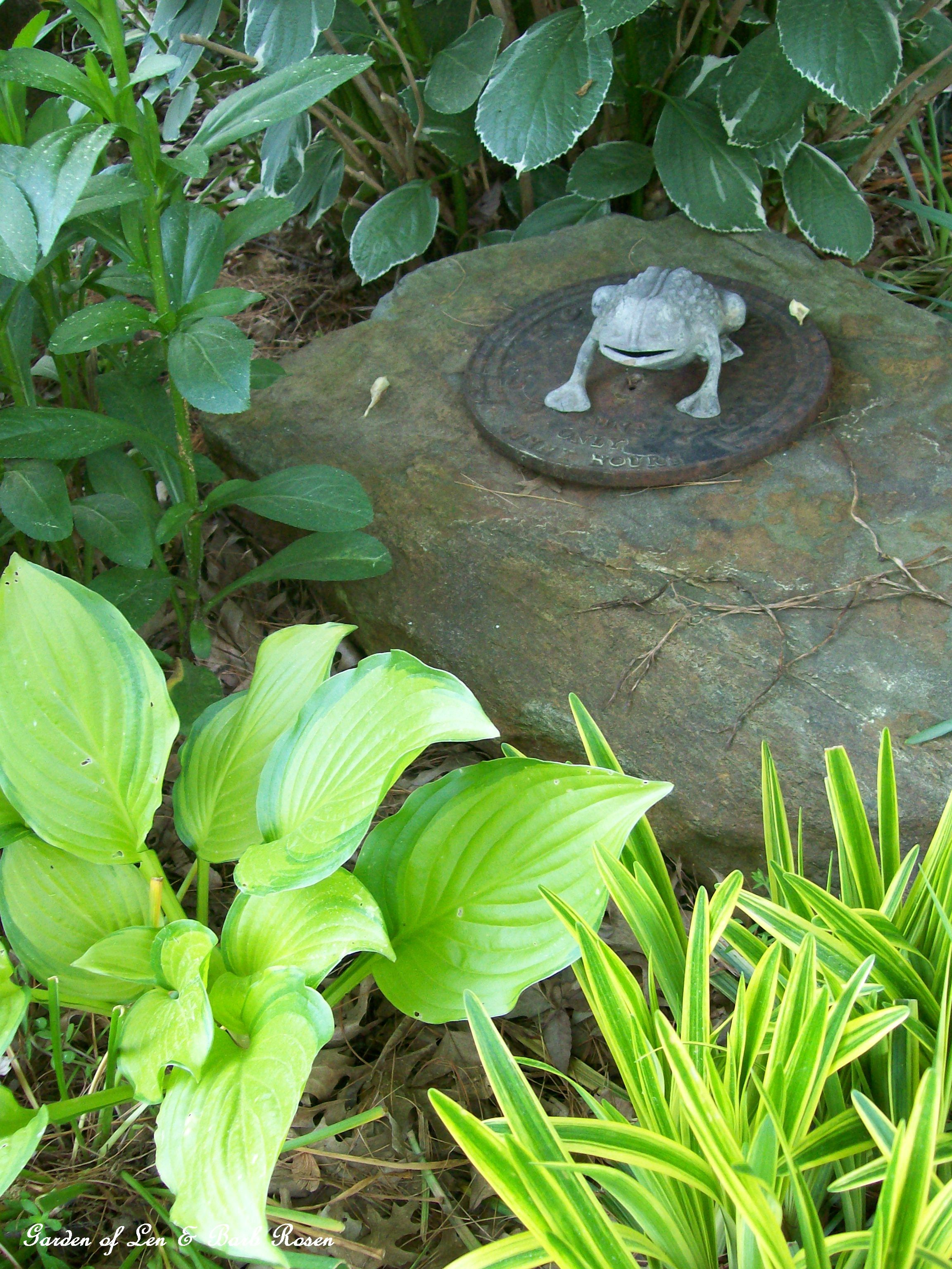 Cast iron frog on a stone in the shade garden (May 20, 2012)