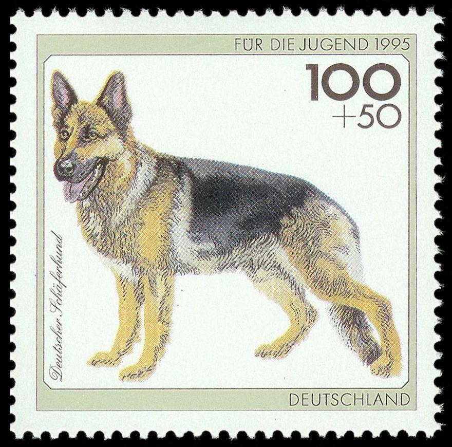 Deutschland 1995 Deutscher Schäferhund (Jugend