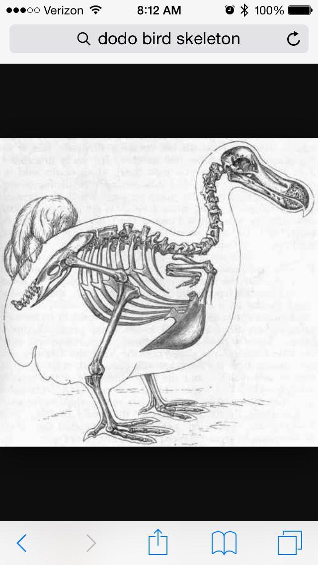 Beautiful | Ratta tatta tattoos | Animal skeletons, Skeleton