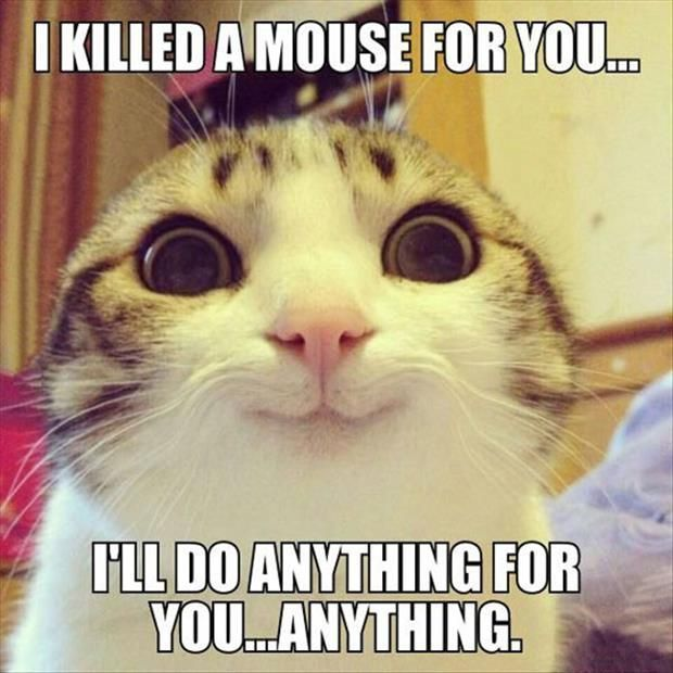 I Killed A Mouse For You I Ll Do Anything For You Anything