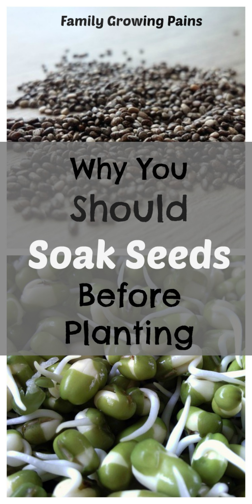 Is Soaking Seeds Before Planting Necessary? » Family Growing Pains