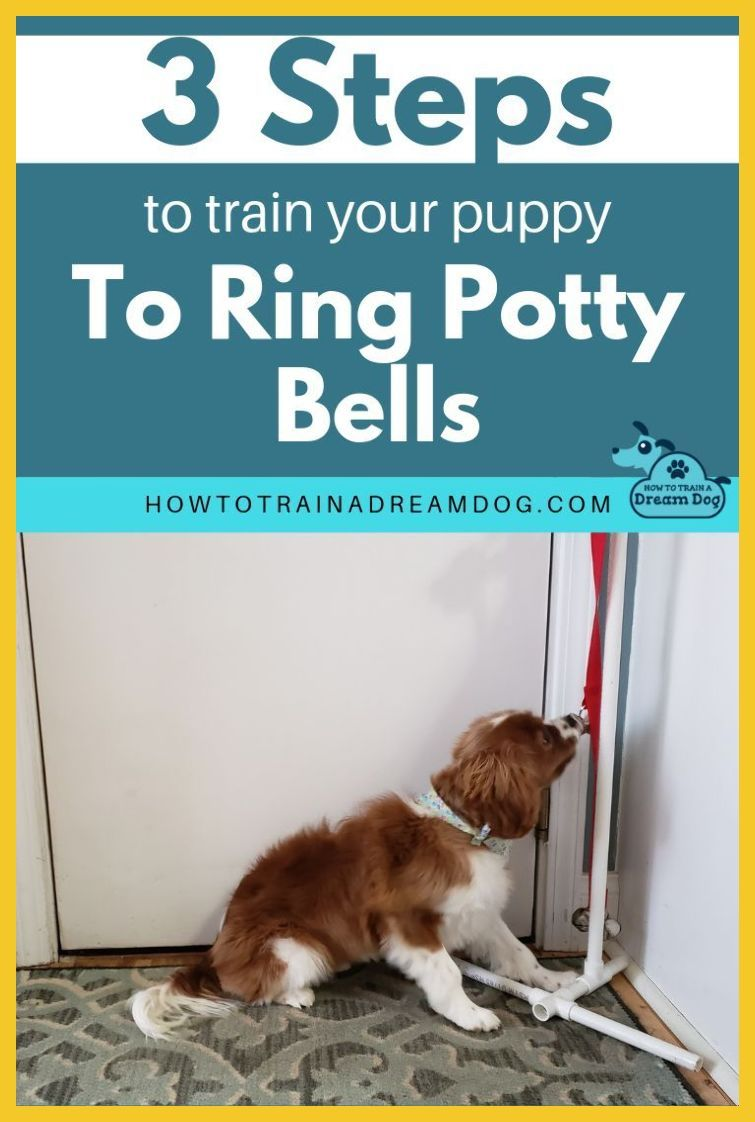 How To Potty Train A Boxer Young Puppy With The Potty Training