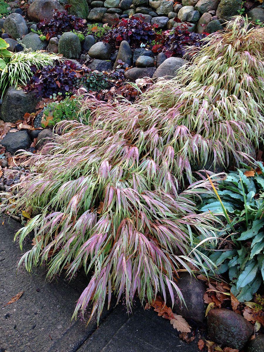 October November And December In Tim S Ohio Garden Grasses Garden Ohio Garden Grasses Landscaping